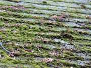 Образование мха и лишайника на поверхности кровли